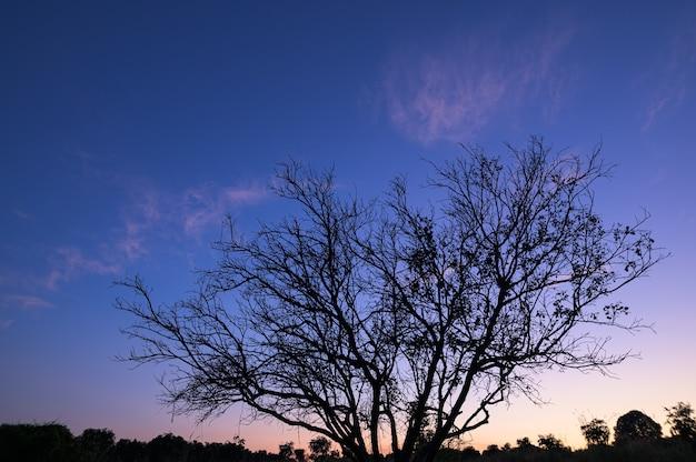 Silhouettes ciel et rayons de soleil dans la soirée