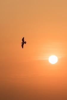 Silhouettes de mouettes volant au coucher du soleil.