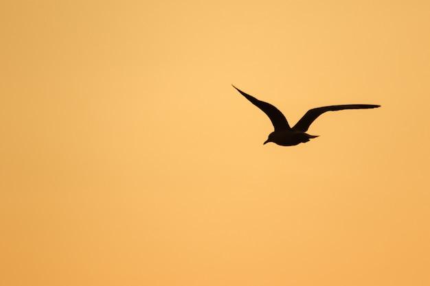 Silhouettes de mouettes volant au-dessus du coucher de soleil. , avec une belle orange