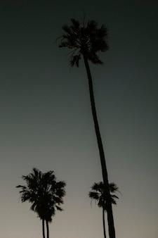 Silhouettes de palmiers dans le ciel sombre