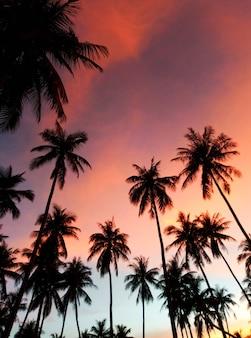 Silhouettes de palmiers sur fond de ciel coucher de soleil coloré. parcelle tropicale.