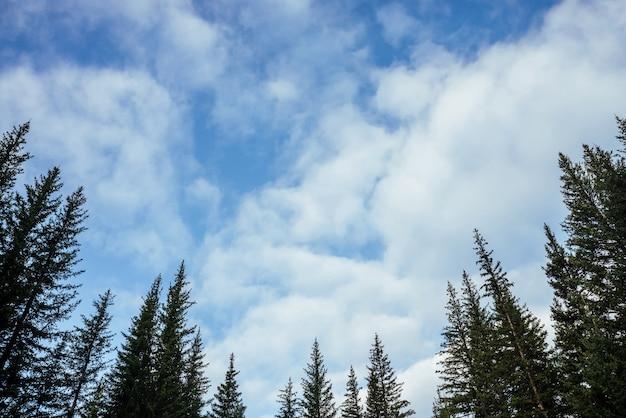 Silhouettes de sommets de sapin sur fond de nuages.