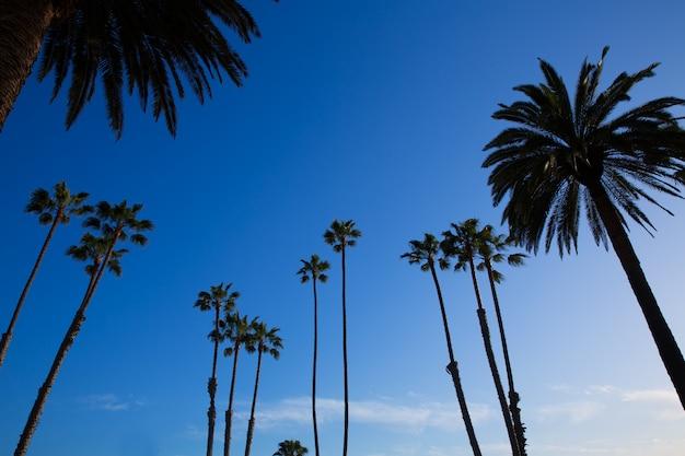 Silohuette haute palmiers de californie sur ciel bleu