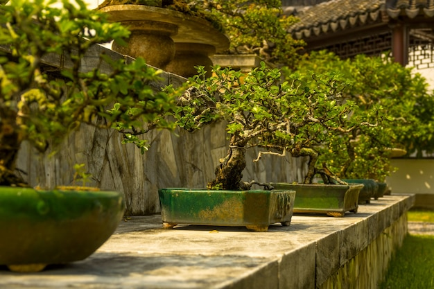 Singapour. jardin japonais. bonsaïs nains de 300 ans