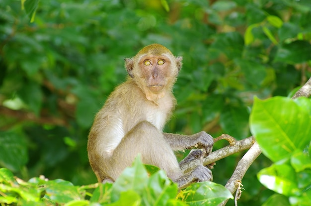 Singe assis sur l'arbre