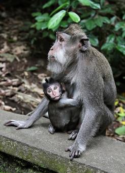 Singe bébé avec sa mère