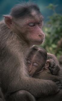 Singe femelle étreignant son bébé enfant
