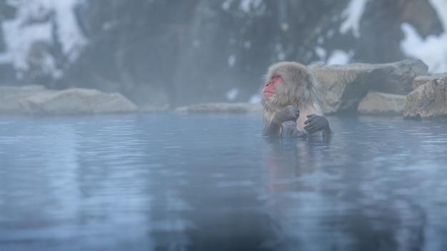 Singe des neiges macaque japonais de portrait de visage rouge dans l'eau froide avec brouillard et neige. bain de macaca fuscata dans une source chaude naturelle d'onsen de nagano. animal dans l'habitat naturel, hokkaido, japon.