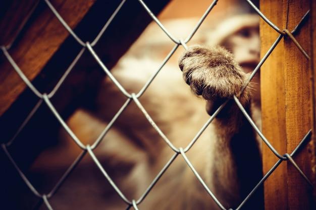 Singe solitaire assis derrière la cage au zoo