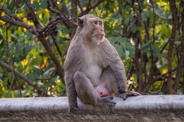 Un singe solitaire est assis sur le bord de la route dans le fond de la nature.