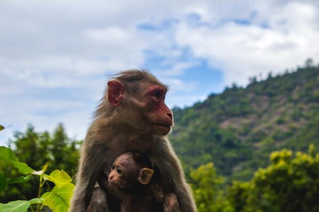 Un singe avec son bébé