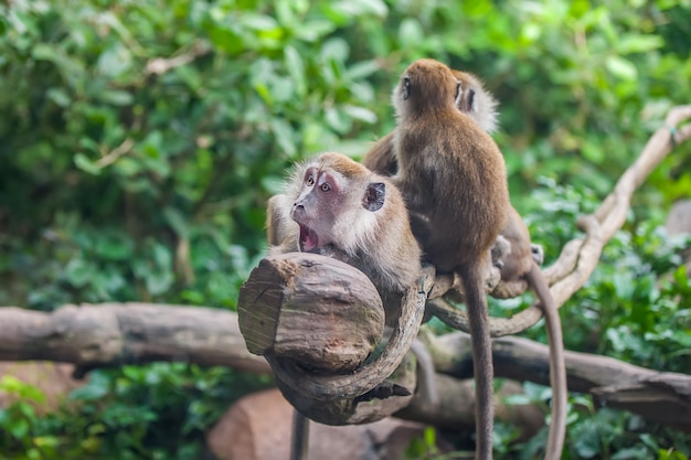 Singe surpris avec 2 singes