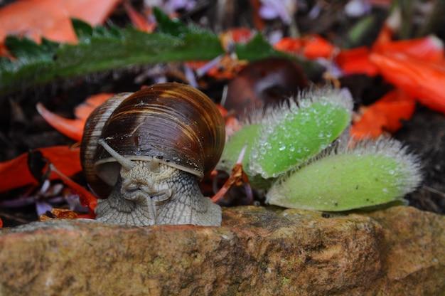 Snail slug sur fond de pierre avec fleur lilas sur le dos.