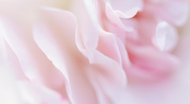 Soft focus abstract floral background pétales de rose rose pâle macro fleur toile de fond pour la marque de vacances