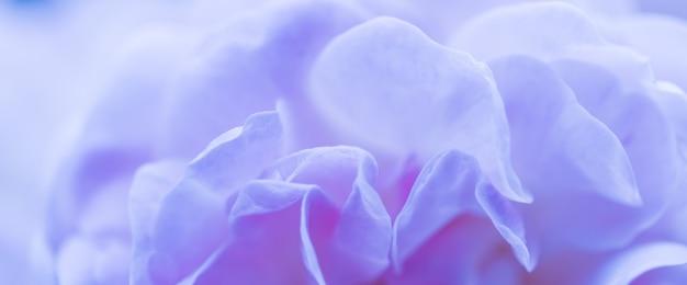 Soft focus abstrait floral fond bleu pétales de rose fleur macro toile de fond pour la marque de vacances