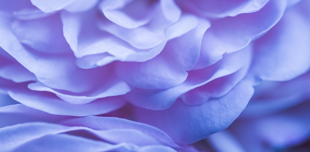 Soft focus abstrait floral fond bleu rose pétales de fleurs macro fleurs toile de fond pour les vacances