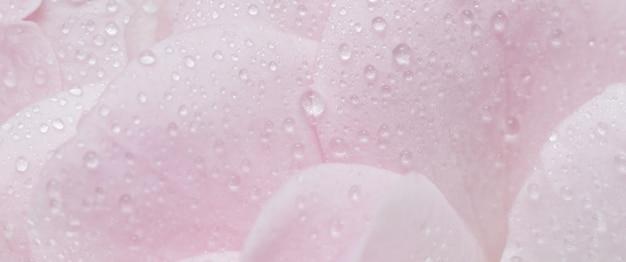 Soft focus abstrait floral fond rose pétales de fleurs de rose avec des gouttes d'eau fleurs macro