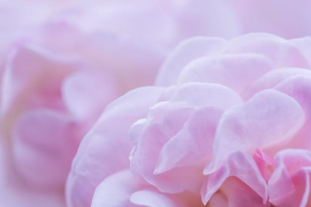 Soft focus abstrait floral fond rose rose pétales de fleurs macro fleurs toile de fond pour les vacances