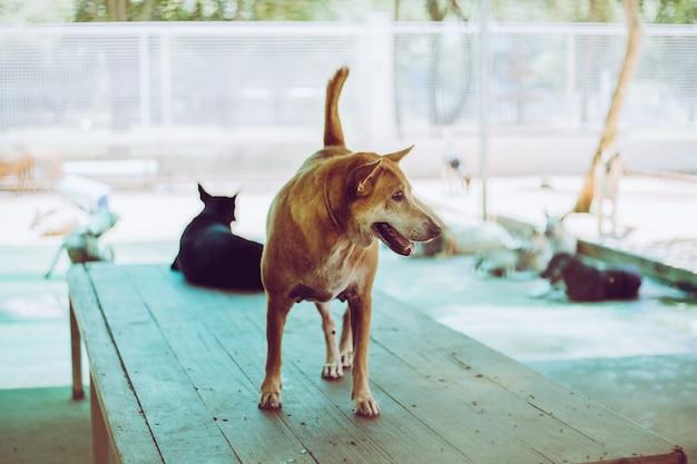 Soft focus un chien errant, seul la vie en attente de nourriture. chien errant sans abri abandonné est couché dans la rue. petit chien abandonné triste sur bois.