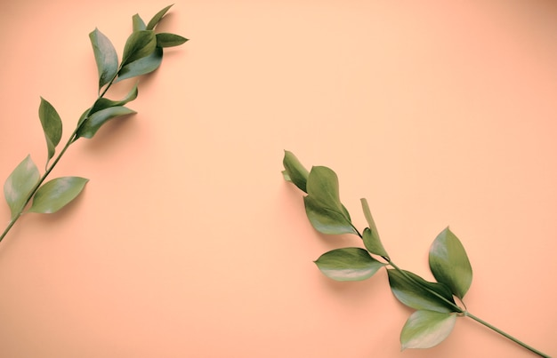 Soin cosmétique naturel de la peau, brindilles vertes. produit biologique, bioscience, médecine alternative, spa. espace pour copier. isolé