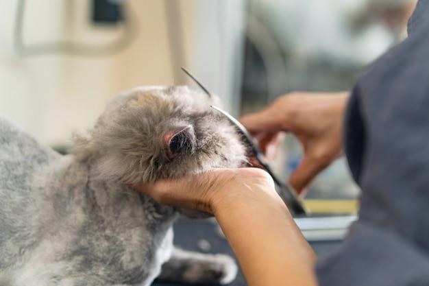 Soins des chats, groomer coupant les cheveux d'un chat dans le salon de beauté pour chiens et chats