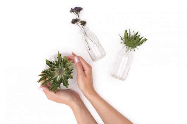 Soins des plantes succulentes