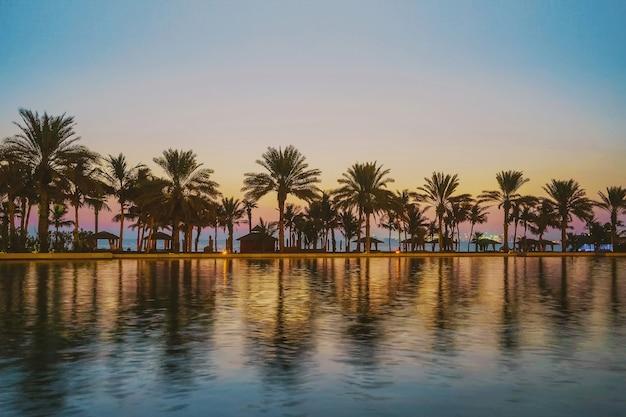Soirée au paradis tropical. palmiers sur le golfe persique après le coucher du soleil. dubai.