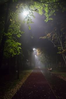 Soirée brumeuse dans le parc