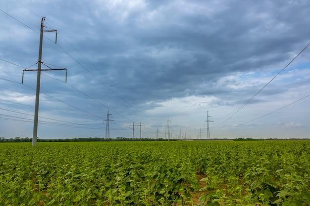 Soirée d'été. de gros nuages sur un champ de tournesols. les lignes électriques
