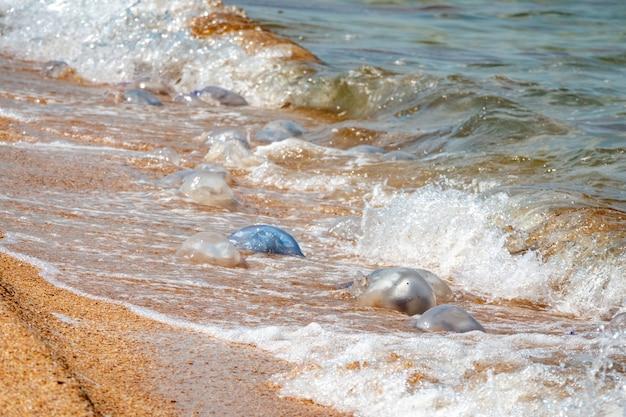 Soirée d'été sur une plage de la mer d'azov en été