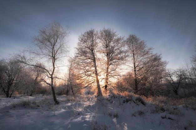 Soirée d'hiver glaciale en forêt, arbres dans la neige et givre