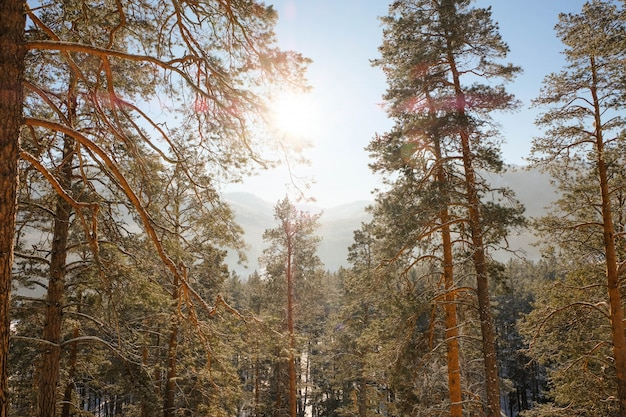 Soirée d'hiver en haute montagne
