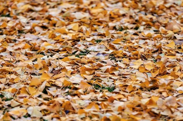 Sol couvert de nombreuses feuilles d'automne