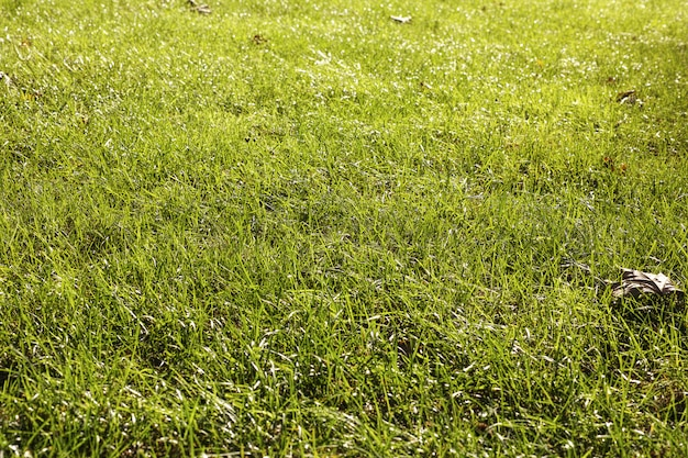 Sol couvert de pelouse
