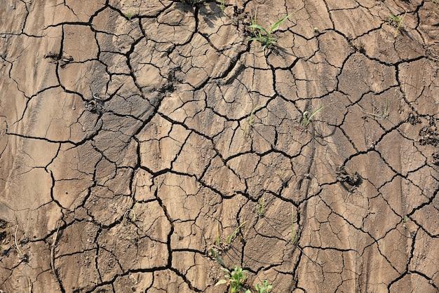 Sol fissuré au sol