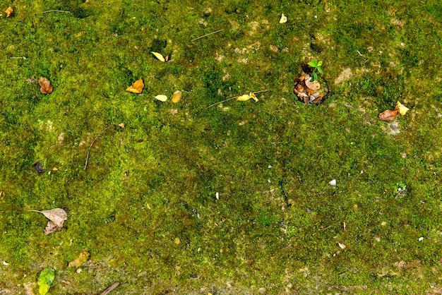Sol avec fond de mousse verte.