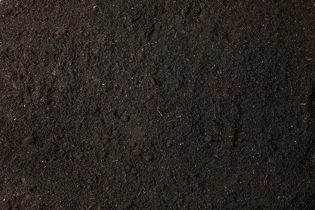 Sol noir comme espace, espace pour le texte et vue de dessus. protection environnementale. agriculture