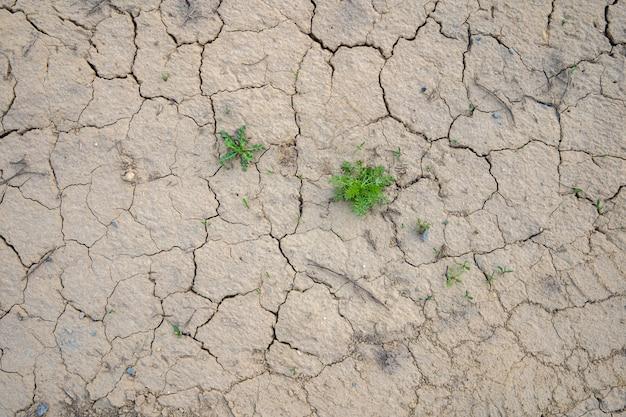 Sol séché fissuré, fond de sécheresse