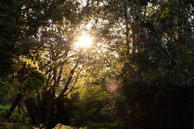 Le soleil brille à travers les branches