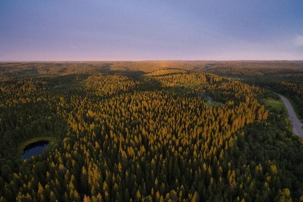 Le soleil couchant peint la forêt d'épicéas de couleur jaune-violet au loin est la colline. carélie, russie, 2016