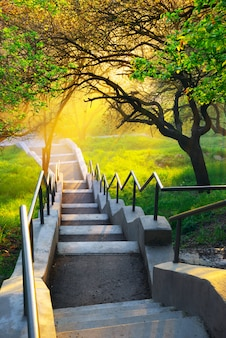 Soleil dans un magnifique parc