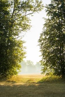 Le soleil du matin et le brouillard se frayent un chemin à travers les arbres