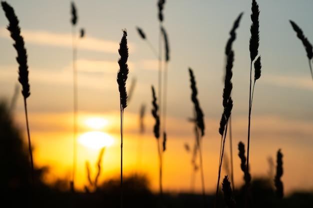 Soleil d'été dans la nature, coucher de soleil du soir.