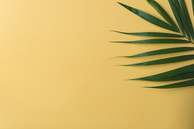 Soleil sur une feuille de palmier.