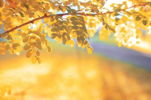 Soleil de feuille de parc d'automne