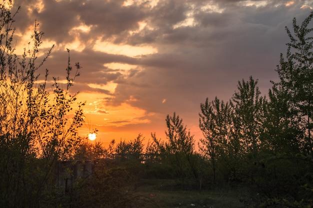 Soleil levant dans la brousse