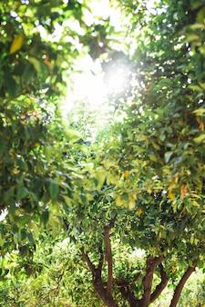 Soleil lumineux derrière les arbres de la forêt