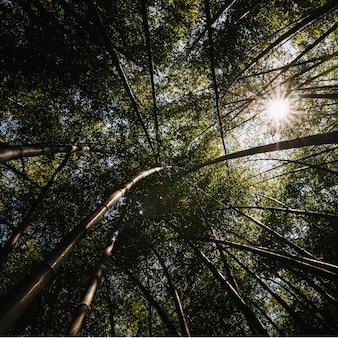 Soleil à travers grand arbre