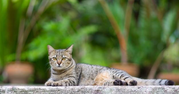Sommeil de chat sur le sol