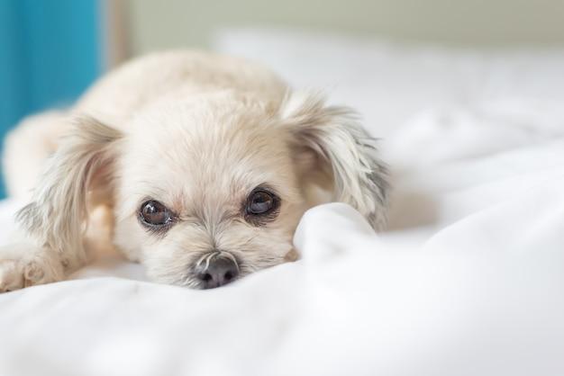 Le sommeil de chien repose sur le lit dans la chambre à la maison ou à l'hôtel
